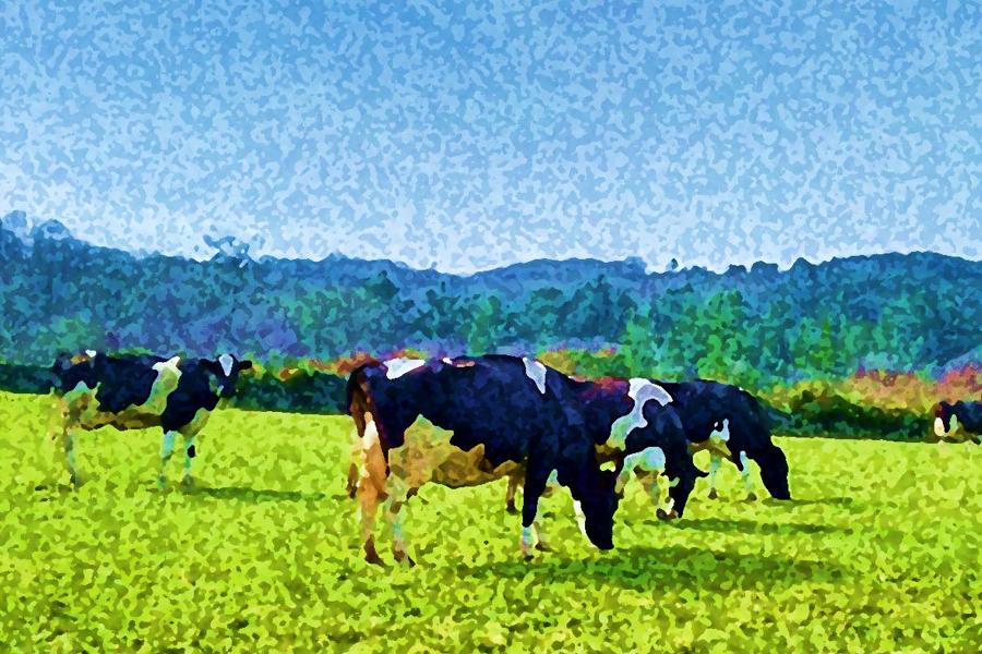 Lacteacyl - Vacas lecheras